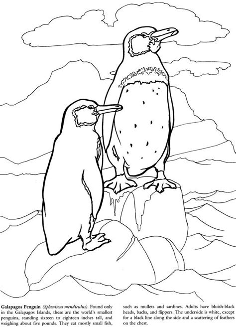 galapagos penguin coloring page galapagos islands coloring book color pages pinterest