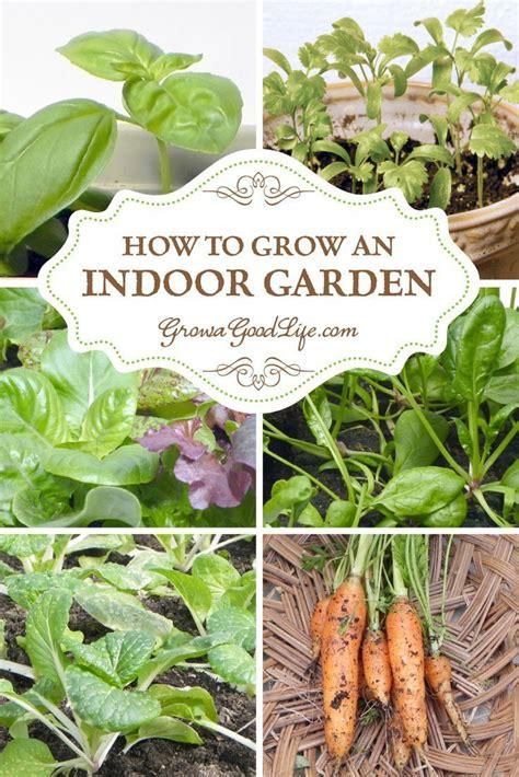 growing herbs indoors under lights 17 best images about indoor gardening on pinterest