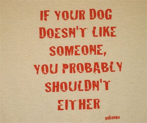 7 Signs That Your Doesnt Like You by 17 Best Images About If Dogs Could Talk On