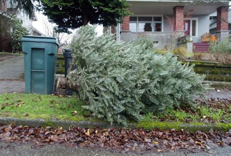 here s where you can recycle your christmas tree the