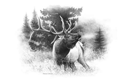 bull elk tattoo designs elk antler drawing search work