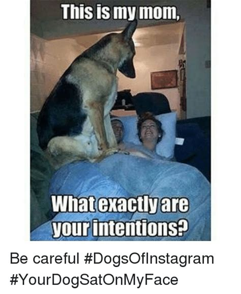 Dog Mom Meme - mis is my mom what exactly are your intentions be careful
