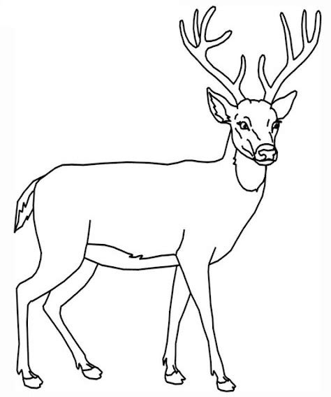 deer coloring pages online deer coloring pages 6 coloringpagehub