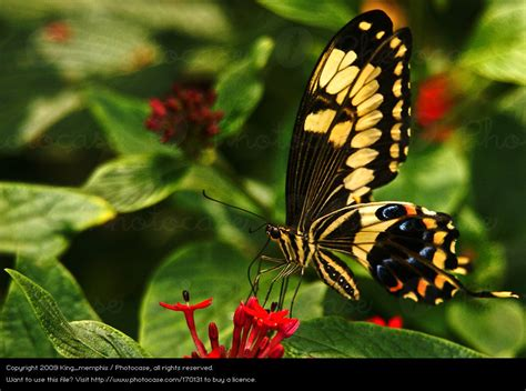 imagenes de animales naturaleza mariposa animal