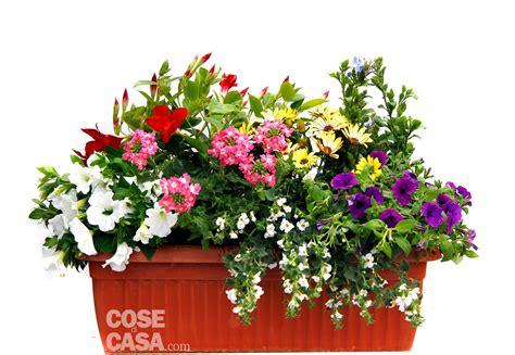 piante da davanzale sul davanzale una cassetta fiorita tutta l estate cose