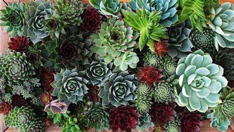 giardini di piante grasse foto giardini con piante grasse foto 4 39 nanopress donna