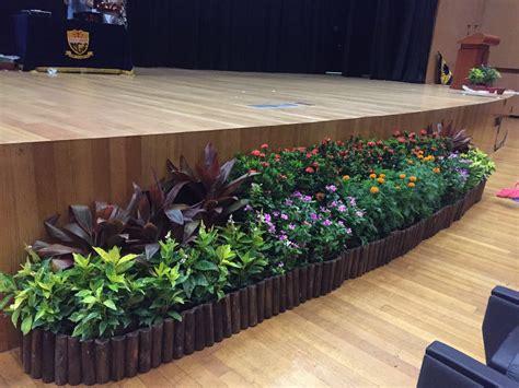 indoor plants singapore 100 indoor plants singapore buy wholesale