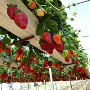 What Can You Grow In A Vertical Garden Vertical Gardening If You Re On Space Go Up Up