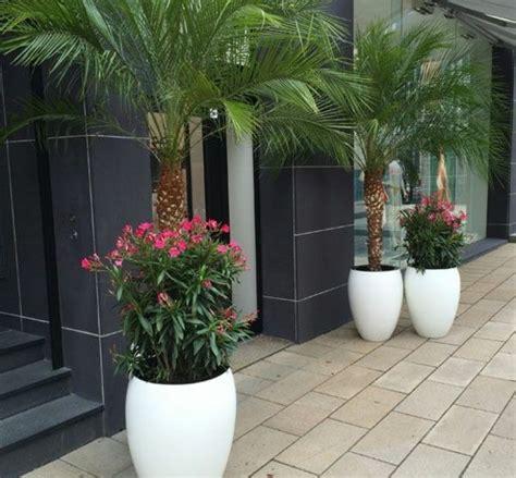 Winterharte Palmen Pflege 5797 by Die Hanfpalme Im Garten Oder Als Zimmerpflanze Beides