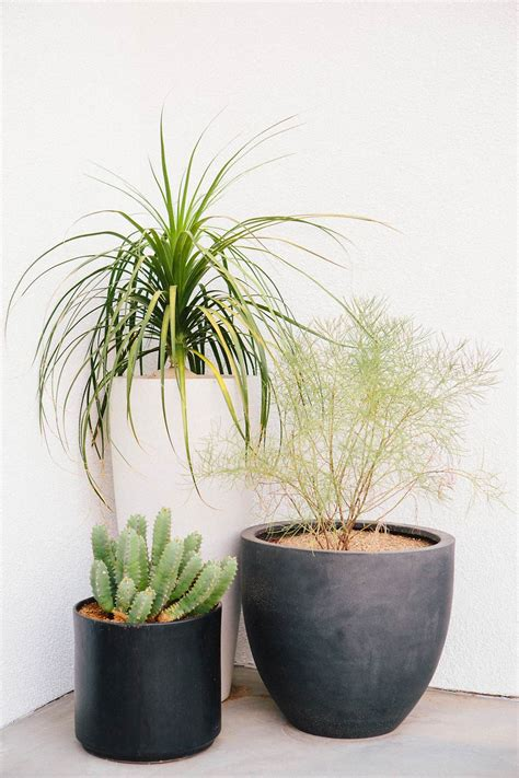 modern houseplants our modern patio makeover with west elm a house in the hills