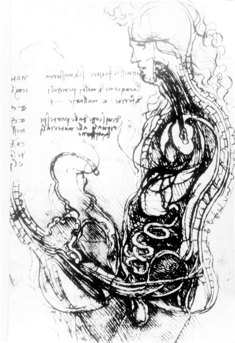 Leonardo Da Vinci (1452–1519) and reproductive anatomy