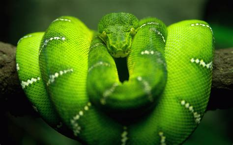 national geographics green snake pictures