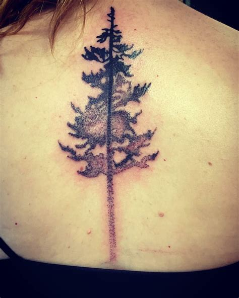 spruce tree tattoo spruce tree using poke technique by sapo from