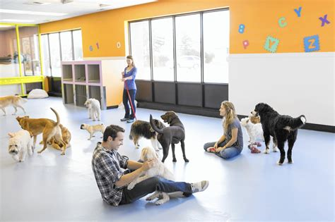 puppy day care chicago day care how to find the best fit for your pup chicago tribune