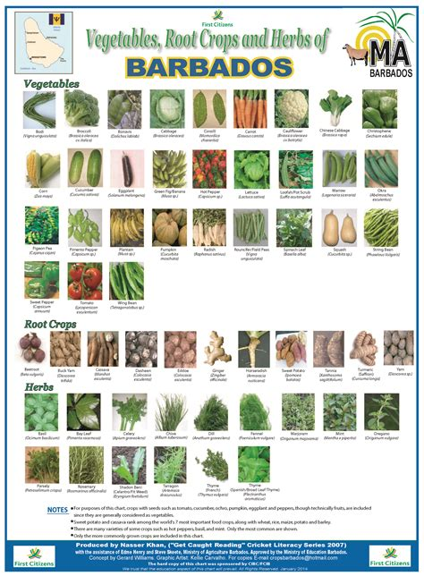 vegetables grown in fruit and vegetable grown in barbados root crop