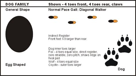 printable animal tracks flashcards animal tracking flash cards outdoored com