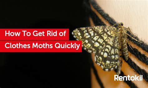 How To Get Rid Of Moths In Wardrobes Naturally how to get rid of moths in wardrobes naturally are these