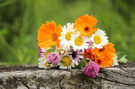 un bel mazzo di fiori un bel mazzo di fiori di co