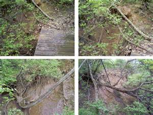 how to prevent hillside erosion in ky pictures of soil