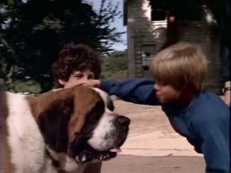 what of is cujo world s scariest stephen king s quot cujo quot vs quot shiner quot attack of the gabby