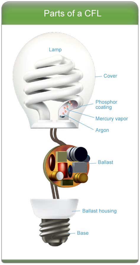 Parts Of A Light Bulb by Learn About Cfls Products Energy