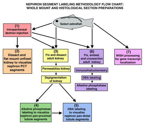 relationship flowchart relationship flowchart create a flowchart
