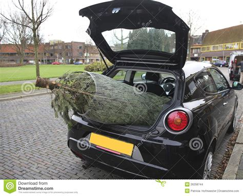 car with tree image tree in car stock photo image of event automobile 26258744