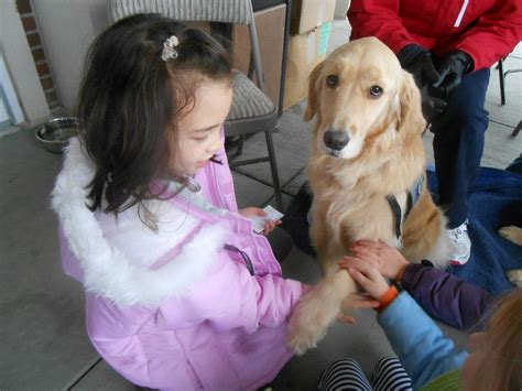 what is a comfort dog comfort dogs visit newtown conn community wtop