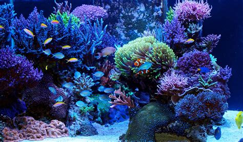 saltwater algae control the ultimate guide home aquaria