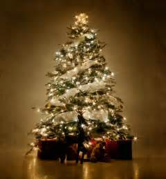 667 x 720 jpeg 62kb pictures of decorated christmas trees slideshow