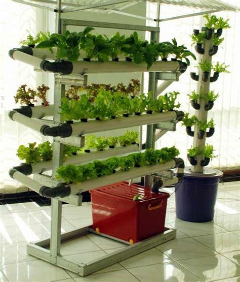 merawat tanaman  aneka tanaman hias tanaman