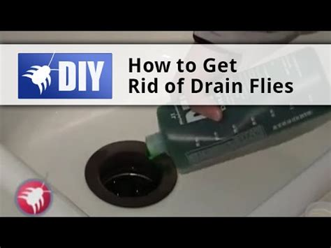 how to get rid of drain flies in the bathroom how to get rid of drain flies drain fly kit with drain