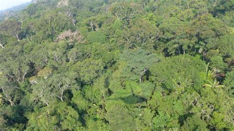 amazonas hängestuhl cada a 241 o se descubren entre 50 y 200 nuevas especies de