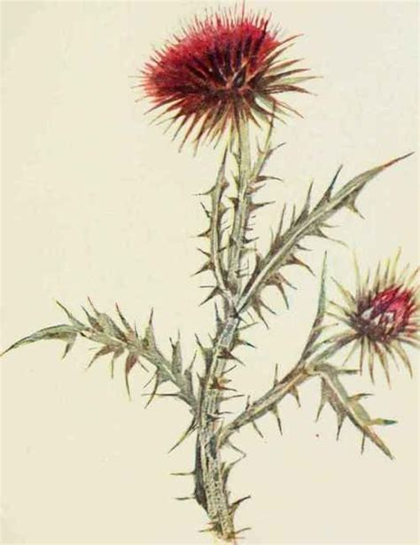 thistle tattoo pinterest for shelley thistle tattoo tattoos pinterest