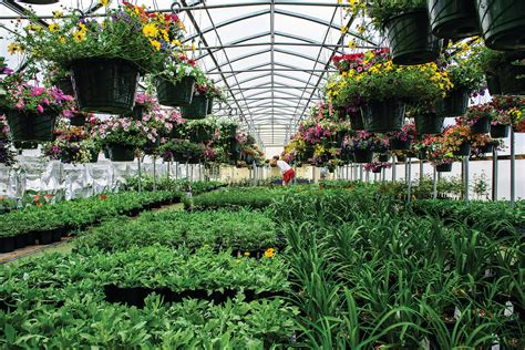 Greenhouse Garden Center by Best Garden Center Petree S Nursery Greenhouse The