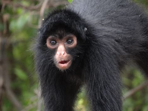 black monkey an adventure through peru