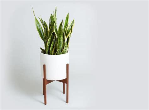 larger plant care guide mindbodygreen