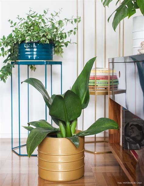 dentro casa plantas para dentro de casa ou ambientes internos