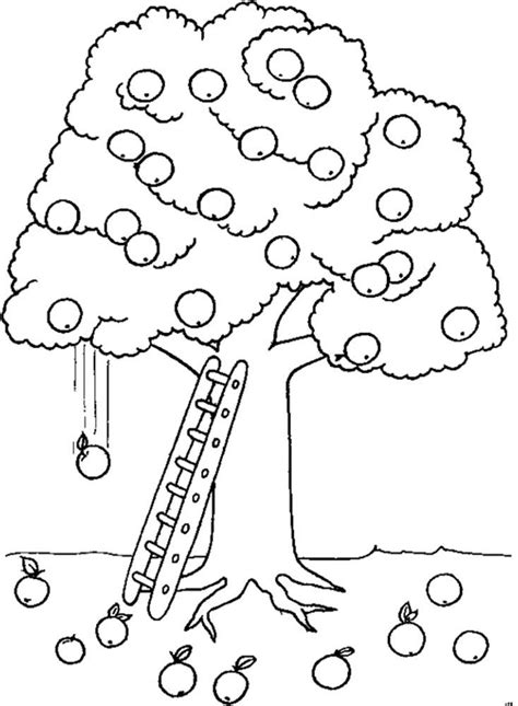 apple harvest coloring pages apple tree coloring pages az coloring pages