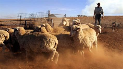 Pink Apologises To Aussie Wool Industry by Australian Wool Industry Does Not Deserve To Be Tarred By