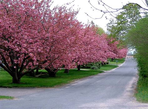 alberi colorati da giardino alberi ma con criterio il potatore