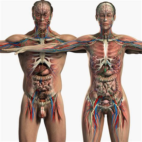 full female anatomy 23 best images about female anatomy on pinterest rivers