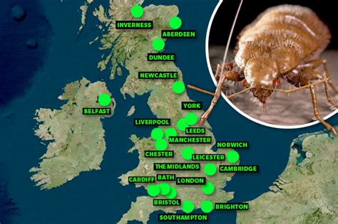 bed bug infestation map bedbugs invade uk blood sucking insects infesting uk