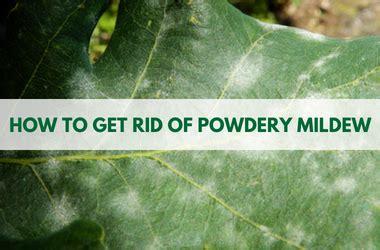 rid  powdery mildew powdery mildew killer