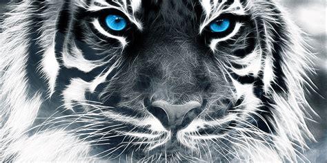 imagenes ojos de tigre harenas0523 wild