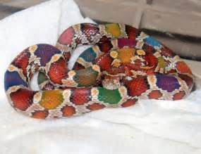 rainbow colored snake the world s catalog of ideas