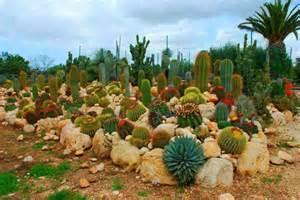 jardin japonais miniature cactus architecture design