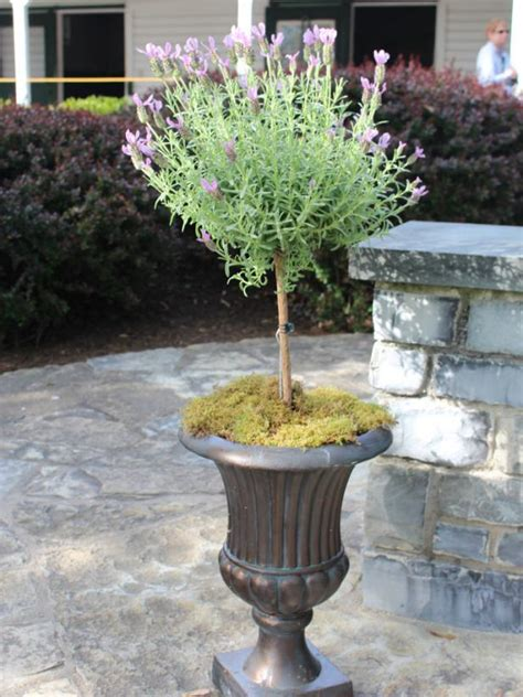 lavender container garden tour the design and flower ideas at virginia s historic