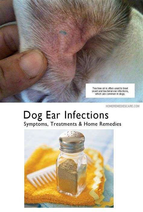is vinegar bad for dogs always keep your healthy