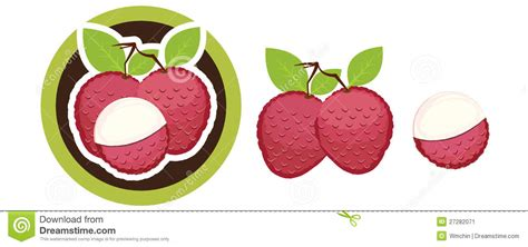 lychee fruit drawing lychee stock vector illustration of drawing ingredient